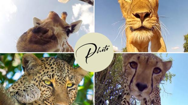 Fotografia fauna selvatica