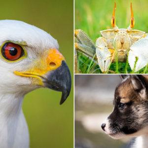 Fotografia fauna