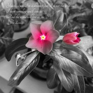 Foto poesia Fiore