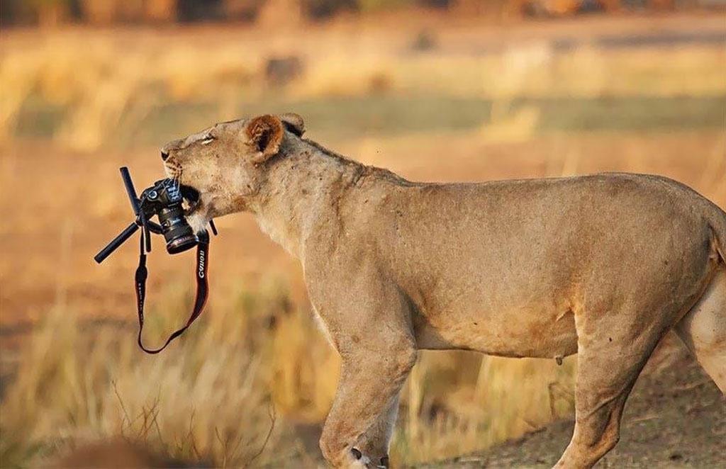 foto leoni